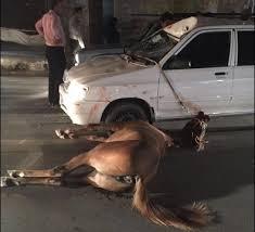 تصادف با حیوان